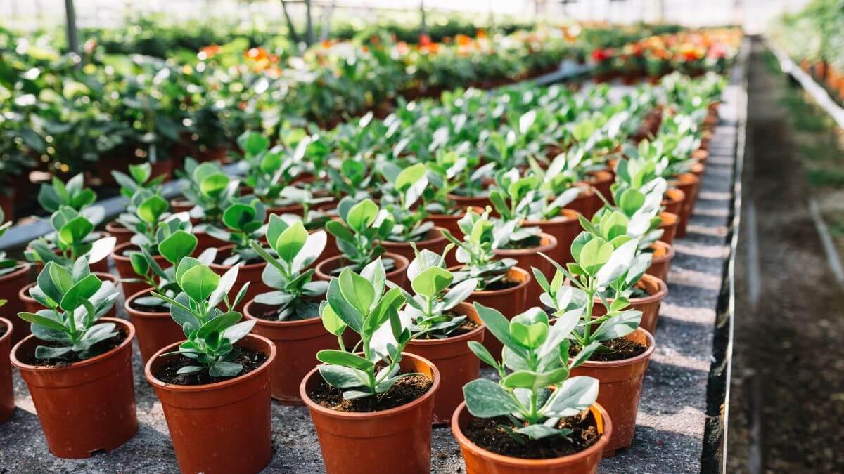 plants - industries